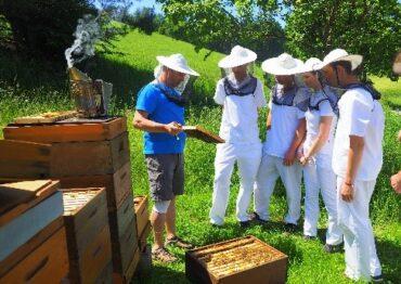 Bienenpraxis
