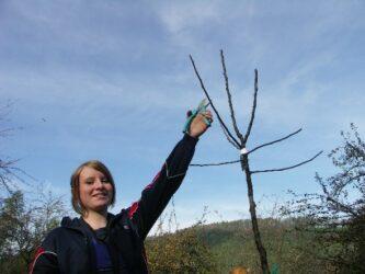 Obstbau_Baumschneiden